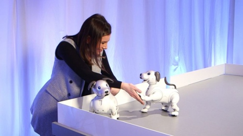 vod-sony-aibo-robot-dog-1-abc-jt-180111_25x14_992-1